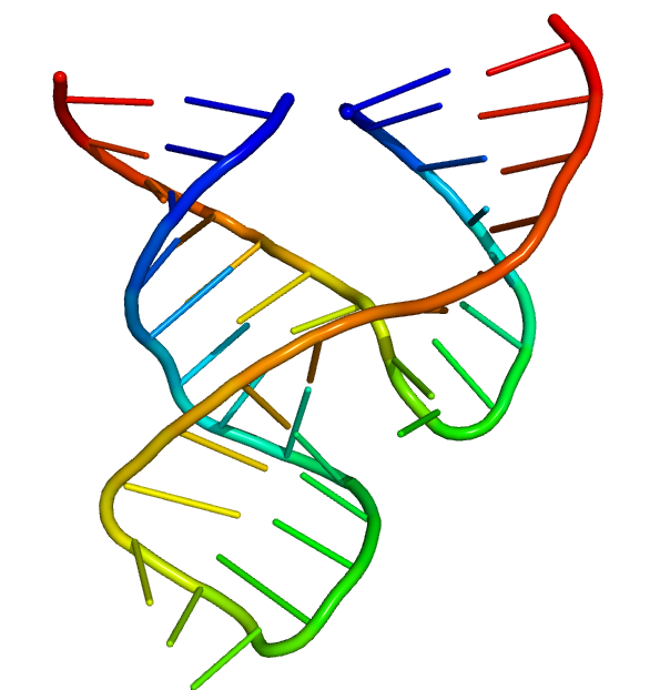 Minimal hammerhead ribozyme structure